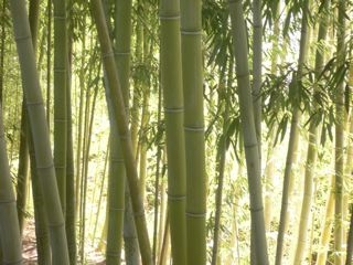 Foothill bamboo culms